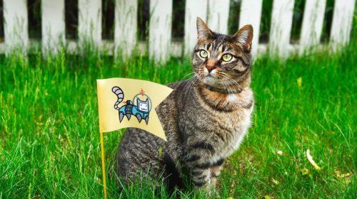 cat-1979438_1280