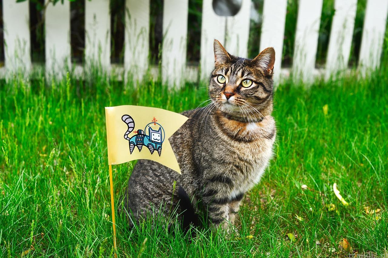 газон и кот