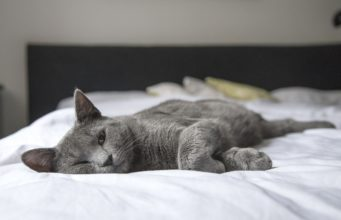 Кот pixabay.com